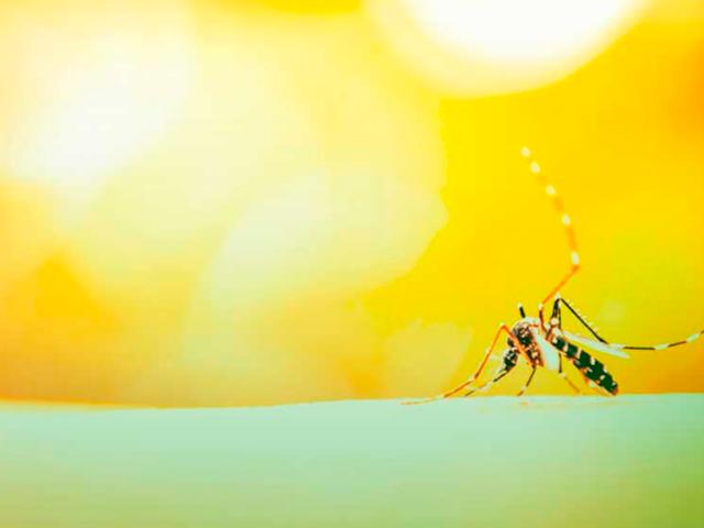 Dengue, Zika Vírus, Chikungunya e Reumatismo