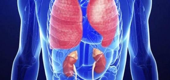Qual é a diferença da Granulomatose de Wegener com reumatismo?